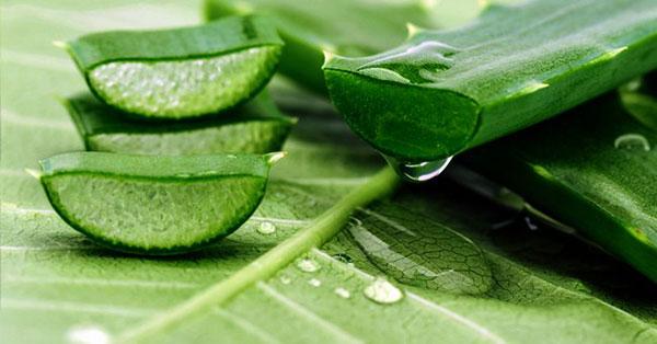 5 cách chữa rụng tóc theo dân gian hiệu quả nhất | rungtoc.vn